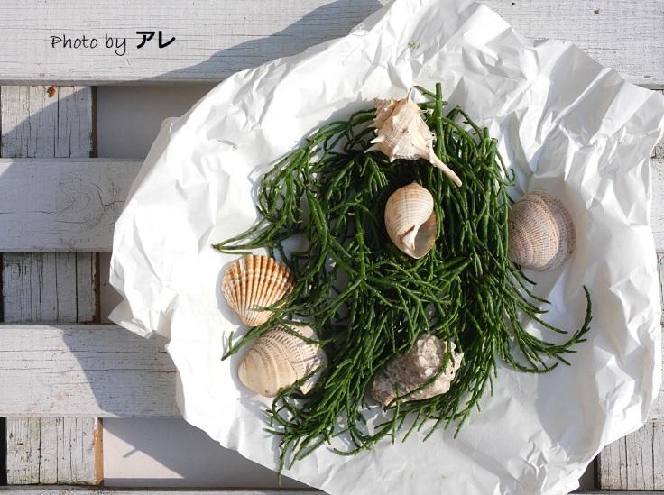 salicornia6.jpg