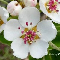 Fiori di primavera, un dono, un augurio per tutti